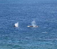 Whale_5