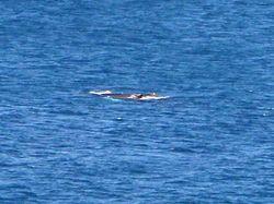 Whale1_cu