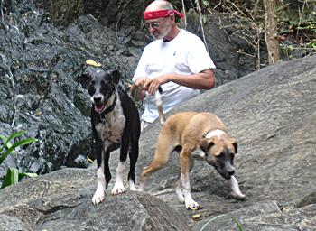 Pups-caribbean-2